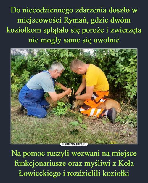 Do niecodziennego zdarzenia doszło w miejscowości Rymań, gdzie dwóm koziołkom splątało się poroże i zwierzęta nie mogły same się uwolnić Na pomoc ruszyli wezwani na miejsce funkcjonariusze oraz myśliwi z Koła Łowieckiego i rozdzielili koziołki