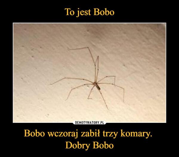 Bobo wczoraj zabił trzy komary. Dobry Bobo –