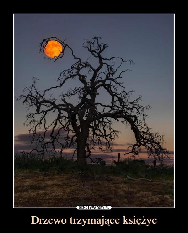 Drzewo trzymające księżyc –