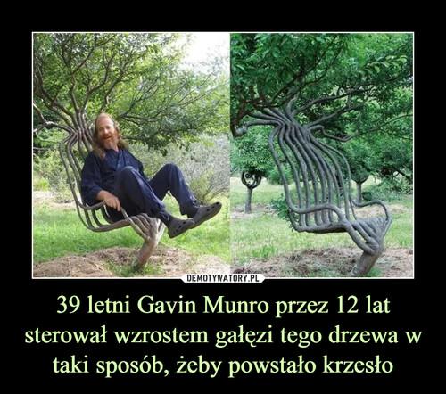 39 letni Gavin Munro przez 12 lat sterował wzrostem gałęzi tego drzewa w taki sposób, żeby powstało krzesło