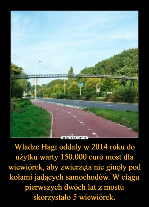 Władze Hagi oddały w 2014 roku do użytku warty 150.000 euro most dla wiewiórek, aby zwierzęta nie ginęły pod kołami jadących samochodów. W ciągu pierwszych dwóch lat z mostu skorzystało 5 wiewiórek.